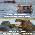 Home : Everyday Cards : Send a Joke - Difference Between A Hippo & A Zippo?