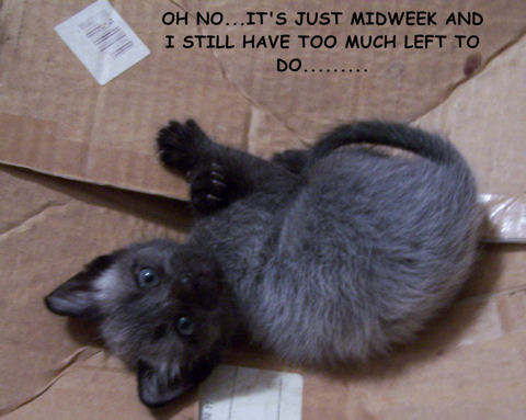 Midweek Crisis Kitty.