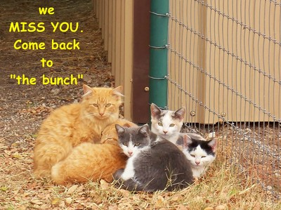 Miss You Kitties