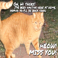 Meow!  Miss You!