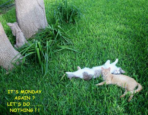 Monday Cats.