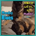 A Cute Monday Blues With Doggies.