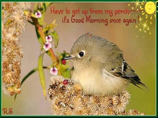 Chirpy Greetings For A New Day.