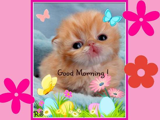 A cute good morning wish for you free good morning ecards 123 a cute good morning wish for you m4hsunfo