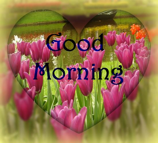 Some Morning Flowers    Free Good Morning eCards, Greeting