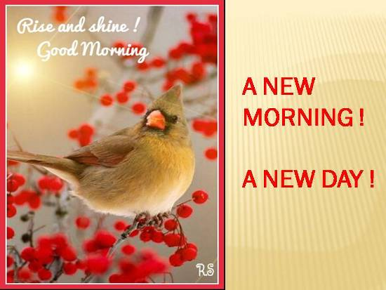 greetings for a wonderful morning  free good morning ecards
