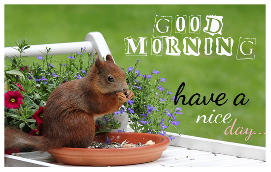 Cute good morning cards