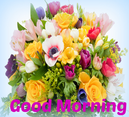Fresh Flowers Of Morning For You! Free Good Morning eCards ...