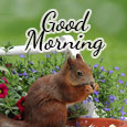 Lovely Morning Wish...