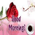 Good Morning Flower.