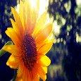 Good Morning To You Sunshine!