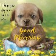 A Very Nice Morning Card Just For You.