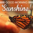 Morning, Sunshine!