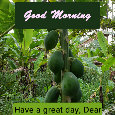 Good Morning, Papaya...