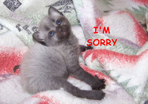 Am Sorry Kitten