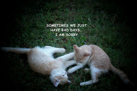 Sorry Kittens.