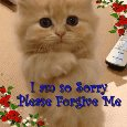 "Kitty Says, ""Please Forgive Me!"""