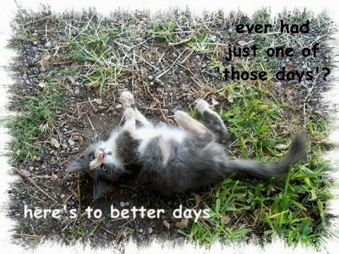 Care Kitten.