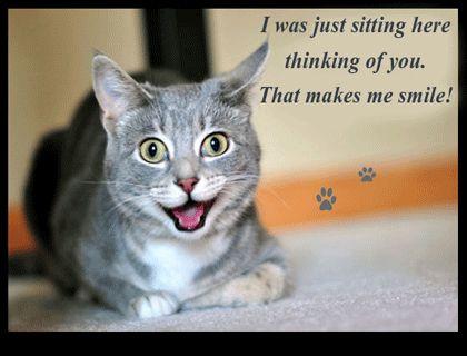 Cute Cat Smile!