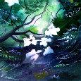 White Begonia.