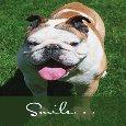 This Funny Bulldog Sends A Smile!