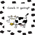 Cute Thinking Of You With Cow Humor.