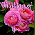 Home : Everyday Cards : Thinking of You - Sending Pink Roses...