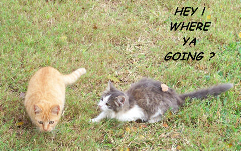 Where You Going? Kittens.