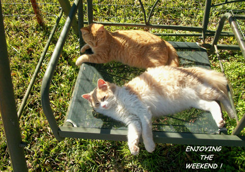 Weekend Kitties.