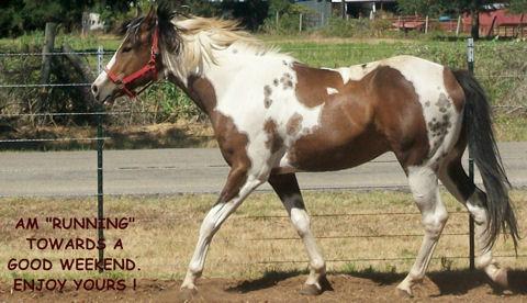 Weekend Horse.