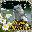Home : Everyday Cards : Enjoy the Weekend - Squirrel Enjoys The Weekend.