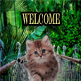 Home : Everyday Cards : You are Welcome - Cat Welcomes You.
