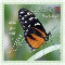 Inspirational Butterfly Card.