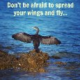 Dont Be Afraid To Spread Your Wings.