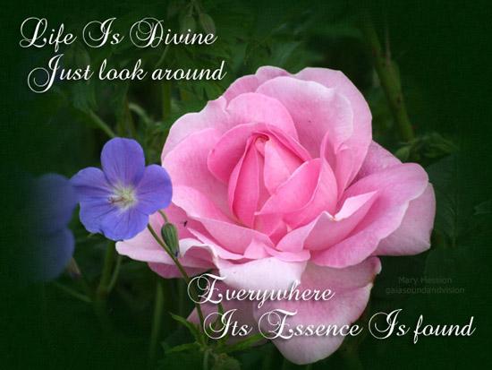 Life  Is Divine.