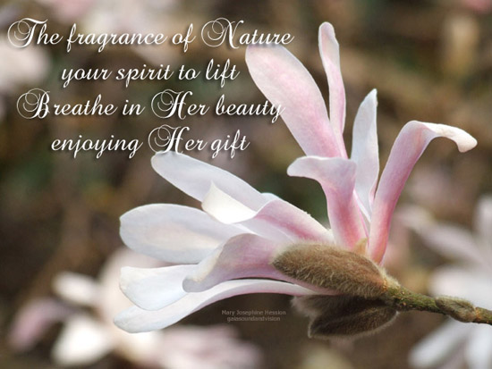 The Fragrance Of Nature.