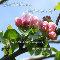 Beautiful Blossoms...