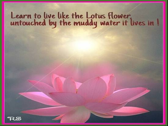 Quotes About Flowers And Happiness