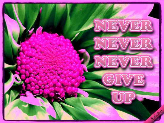 Never, Never Give Up.