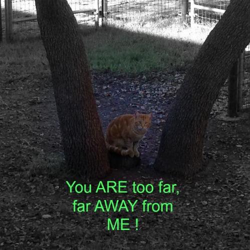 Far Away Cat...