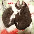 Atractivo Amor Gatos