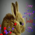 Home : Love : Cute Love Cards - Some Bunny Love Code.