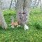 Sorry Love Kittens.