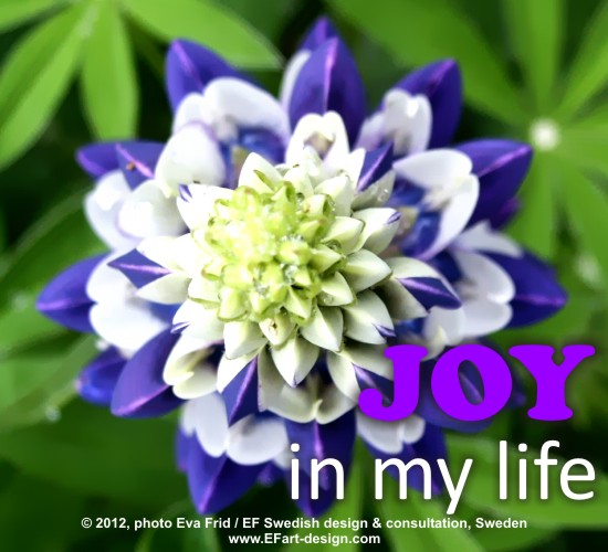 Joy In My Life.