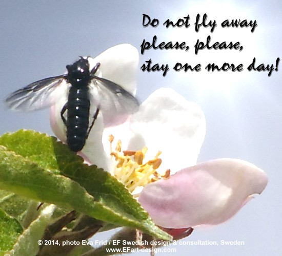 Do Not Fly Away.