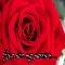 Rose Passion...
