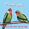 I Love You, Love Birds...