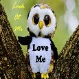 Lovely Owl Card.