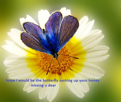 Miss U Like Butterfly.