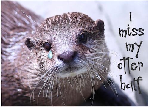 I Miss My Otter Half!